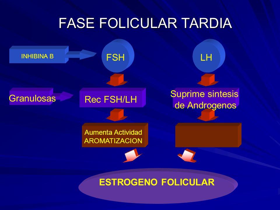 FASE FOLICULAR TARDIA LH FSH Suprime sintesis de Androgenos Rec FSH/LH