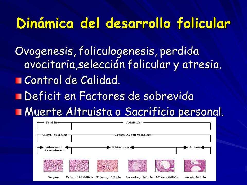 Dinámica del desarrollo folicular
