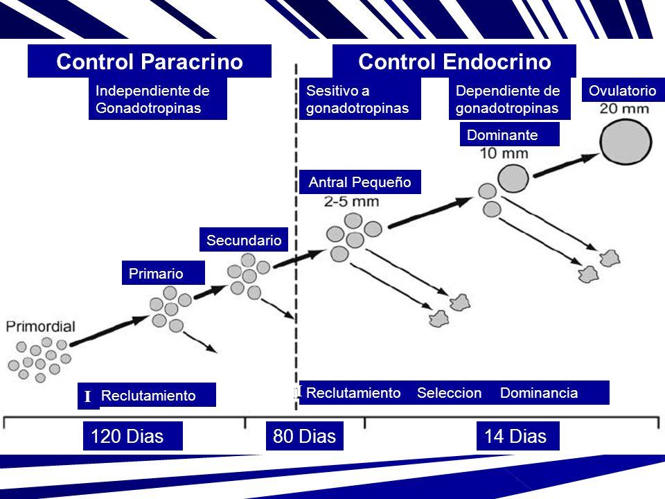 Control Paracrino Control Endocrino