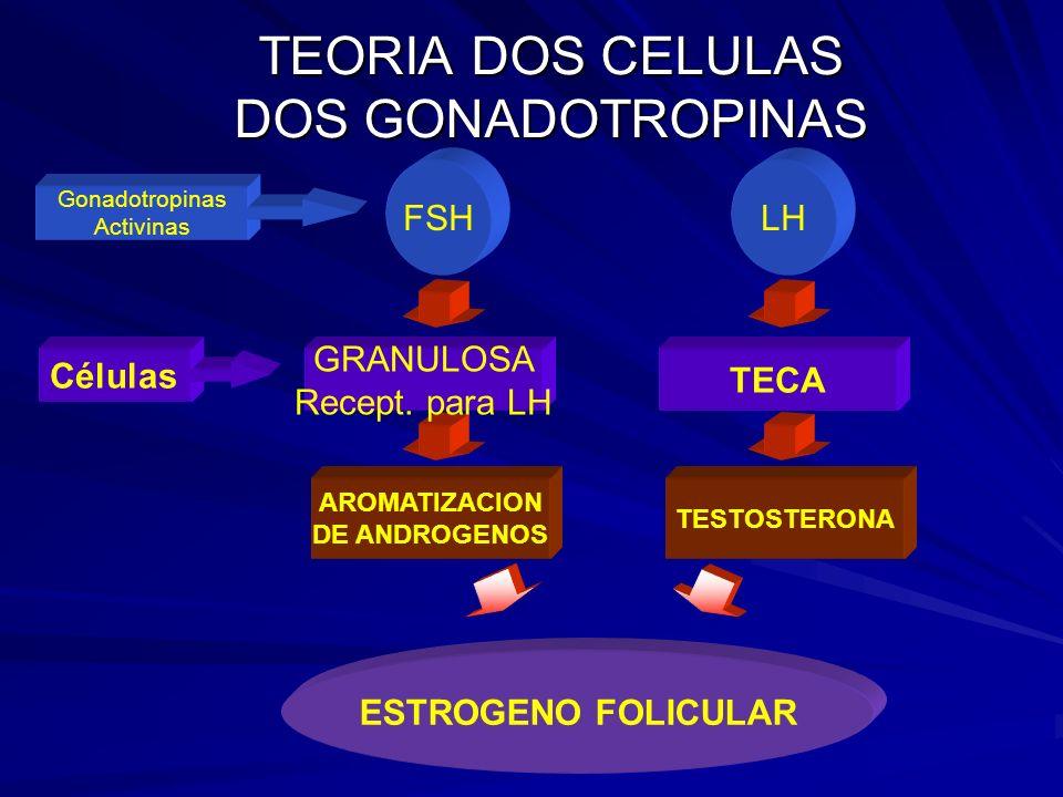 TEORIA DOS CELULAS DOS GONADOTROPINAS