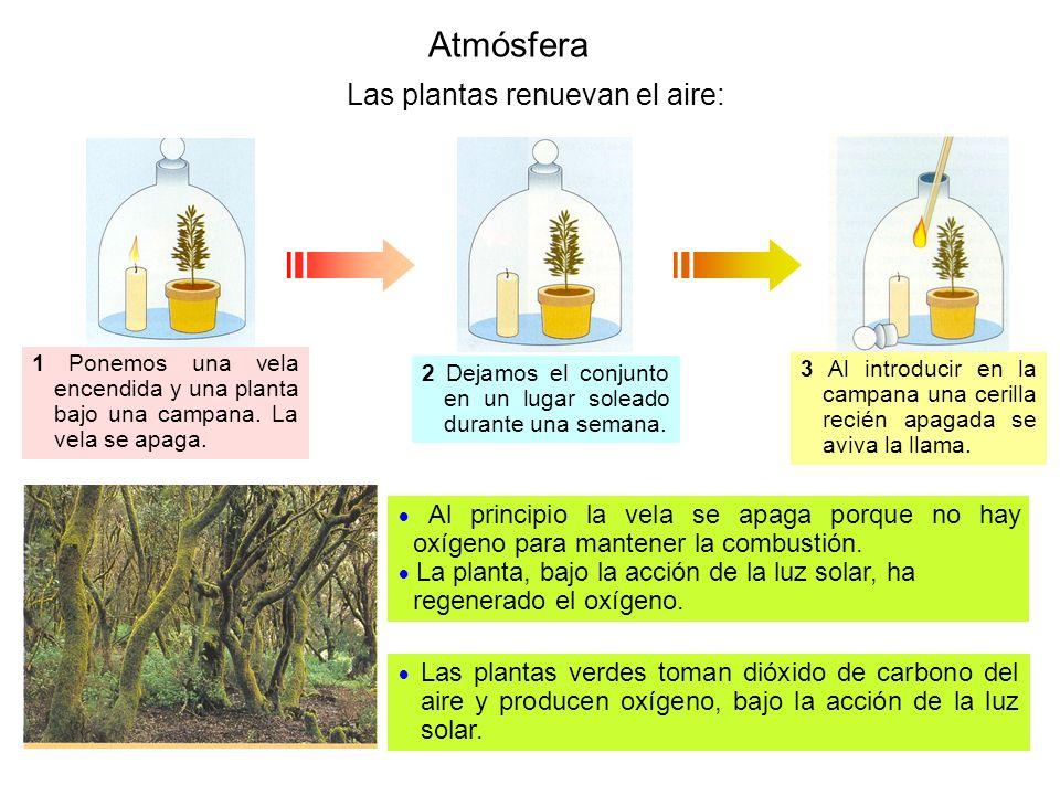 Atmósfera Las plantas renuevan el aire: