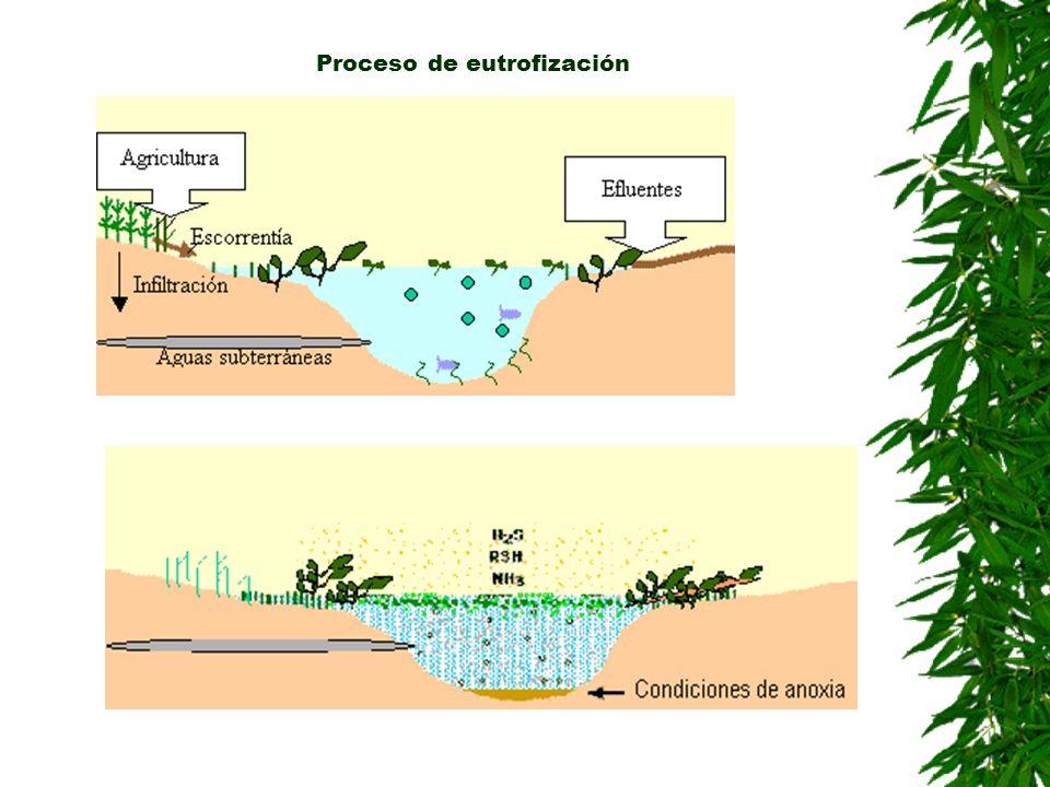 Proceso de eutrofización
