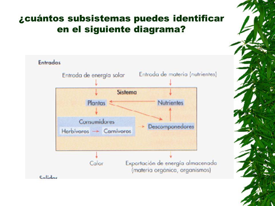 ¿cuántos subsistemas puedes identificar en el siguiente diagrama