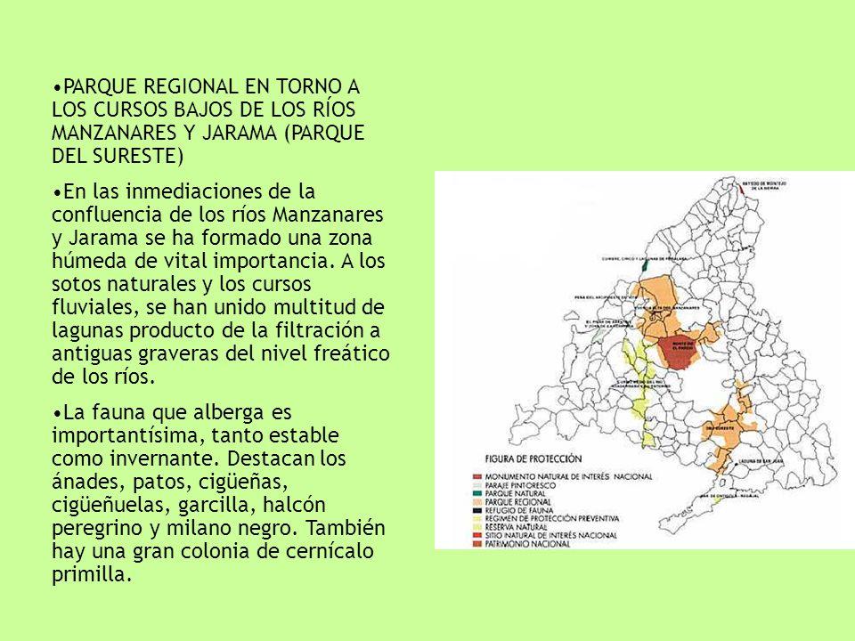 PARQUE REGIONAL EN TORNO A LOS CURSOS BAJOS DE LOS RÍOS MANZANARES Y JARAMA (PARQUE DEL SURESTE)