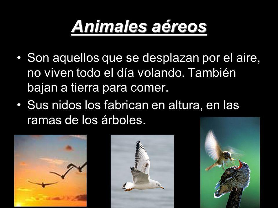 Animales vertebrados ppt descargar for Medio en el que habitan los arboles
