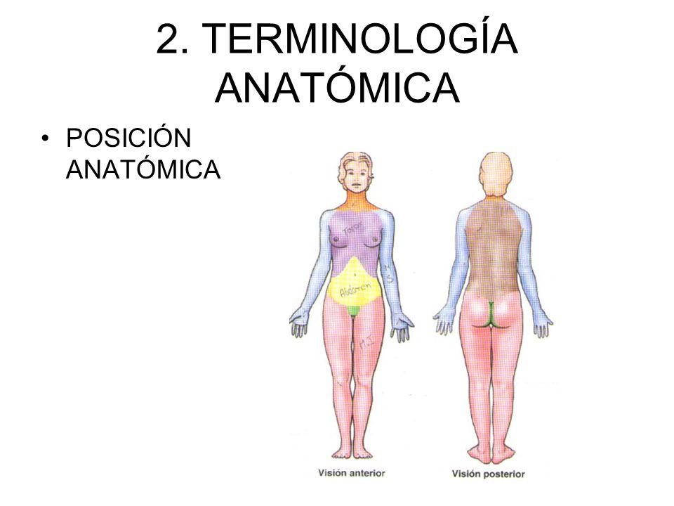 Lujoso Terminología En La Anatomía Galería - Imágenes de Anatomía ...