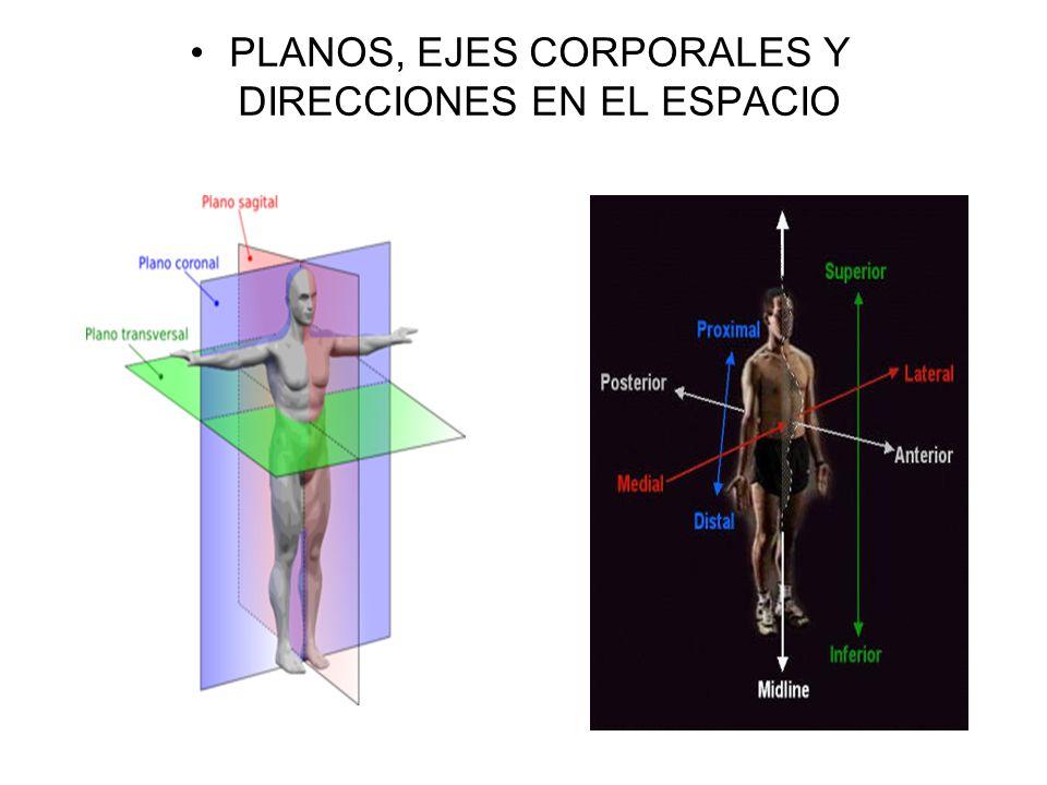 Excepcional Celíaca Eje Anatomía Bosquejo - Anatomía de Las ...