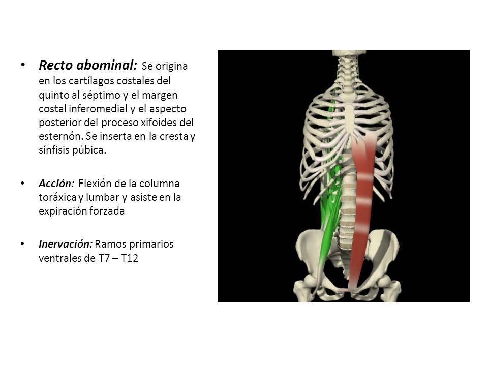 Lujo Proceso De Xifoides Imagen - Anatomía de Las Imágenesdel Cuerpo ...