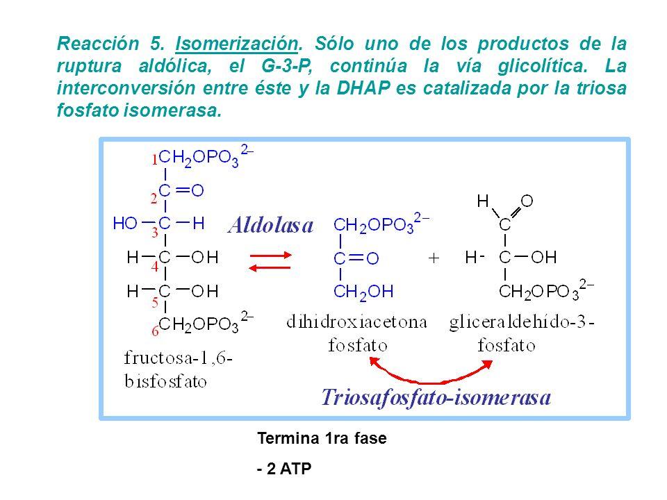 Reacción 5. Isomerización