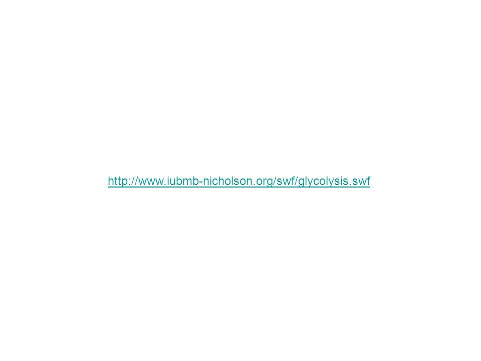 http://www.iubmb-nicholson.org/swf/glycolysis.swf