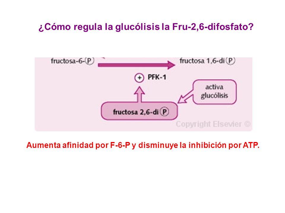 ¿Cómo regula la glucólisis la Fru-2,6-difosfato