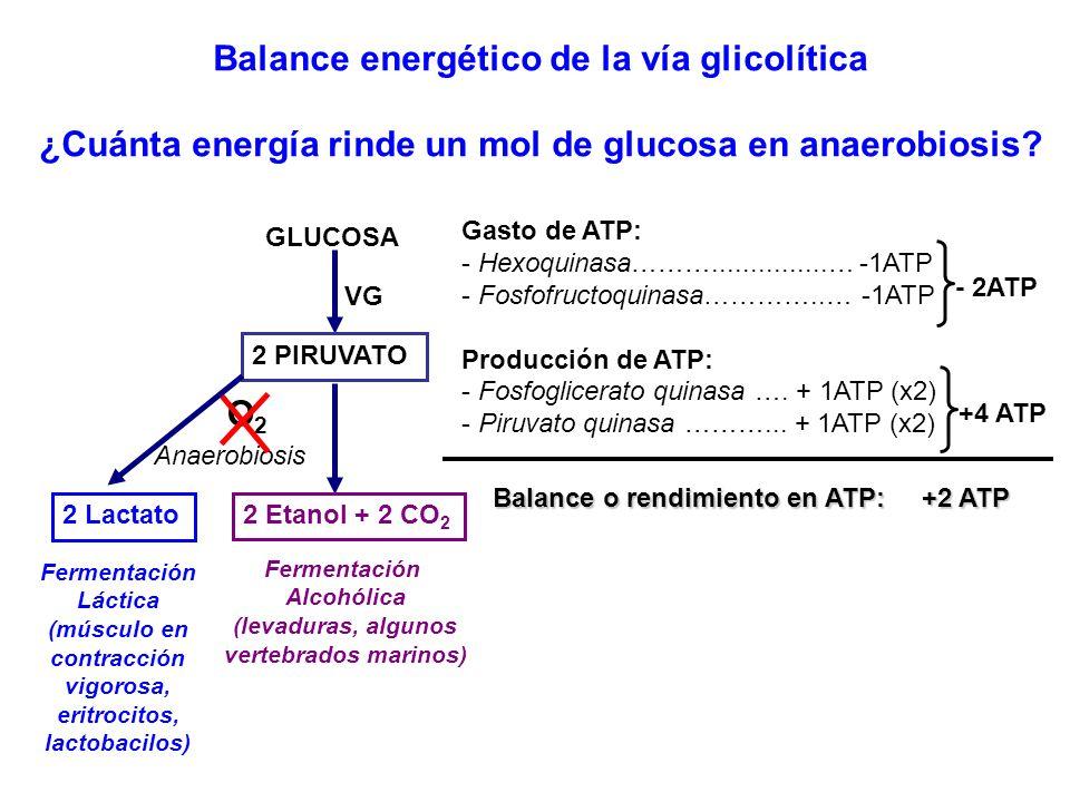 Balance energético de la vía glicolítica