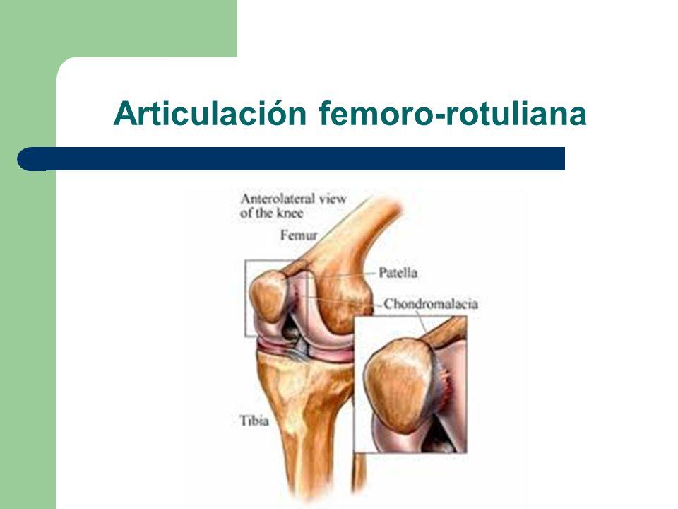 Excepcional Anatomía De Articulación Femororrotuliana Inspiración ...