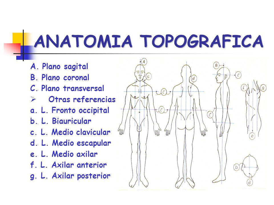 ANATOMIA TOPOGRAFICA A. Plano sagital B. Plano coronal