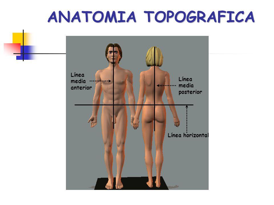 ANATOMIA TOPOGRAFICA Línea media Línea anterior media posterior