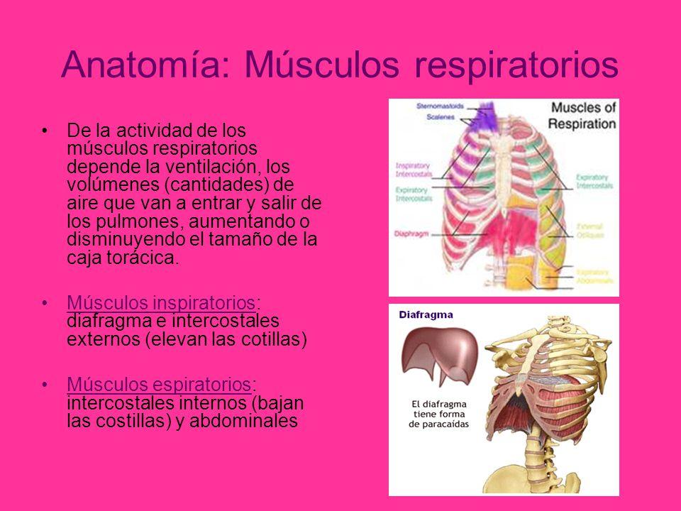 Bonito Anatomía De Un Paracaídas Inspiración - Anatomía de Las ...