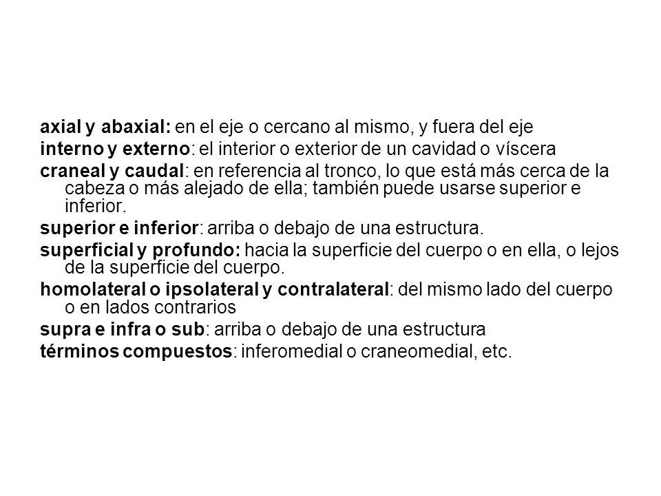 axial y abaxial: en el eje o cercano al mismo, y fuera del eje