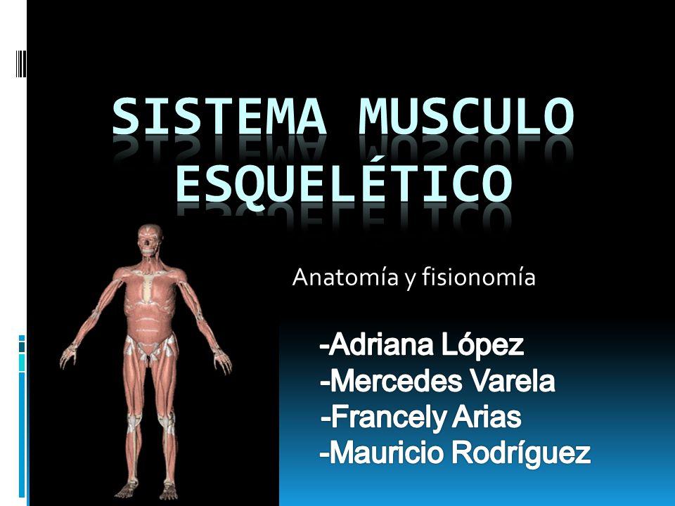 Hermosa Anatomía General Y Sistema Musculoesquelético Ilustración ...