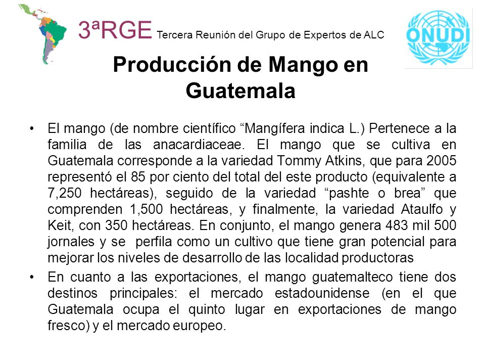 Producción de Mango en Guatemala