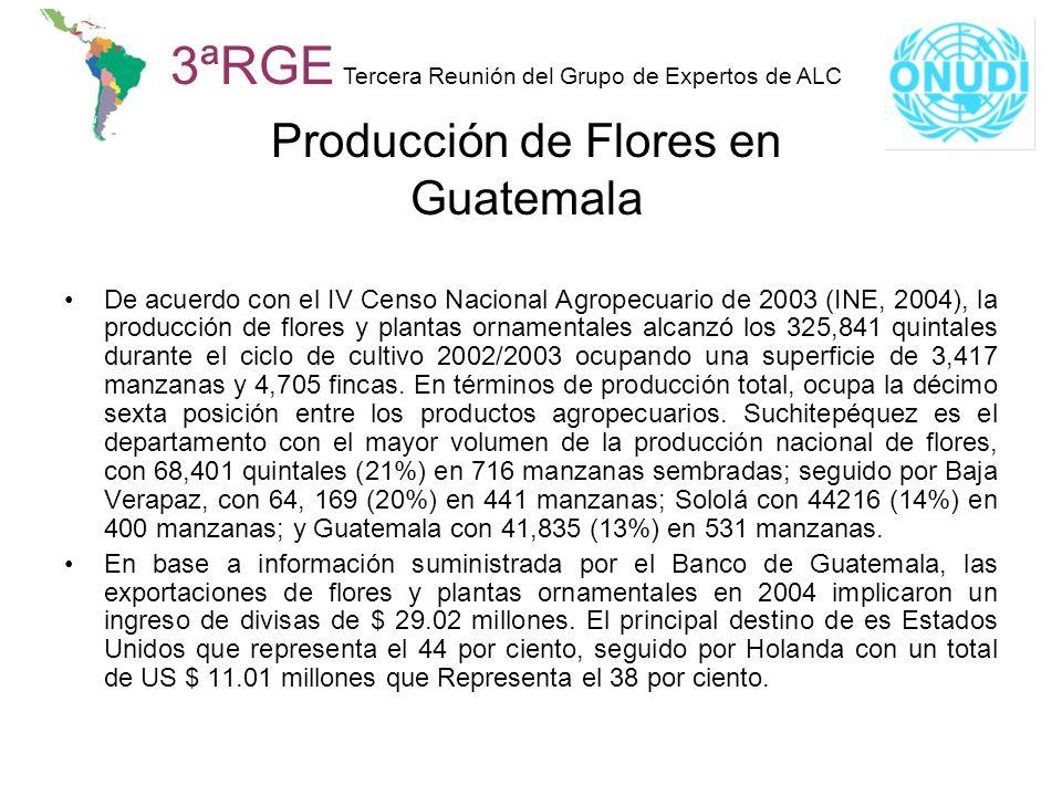 Producción de Flores en Guatemala
