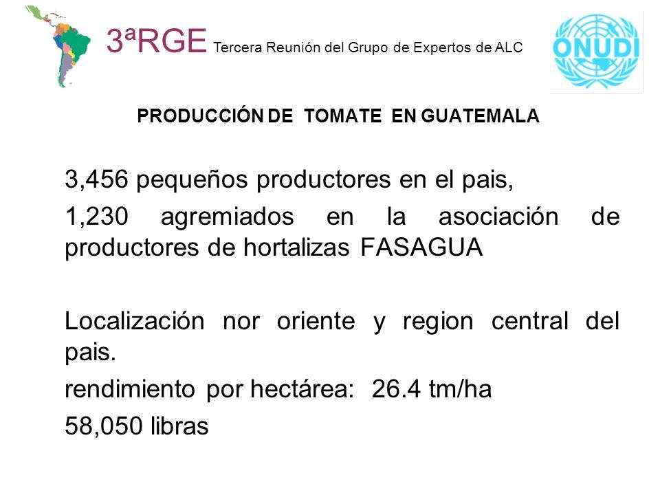 PRODUCCIÓN DE TOMATE EN GUATEMALA