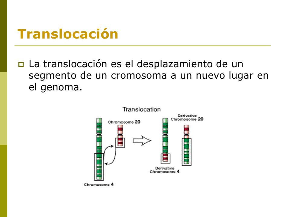 Las mutaciones cromosómicas. - ppt video online descargar