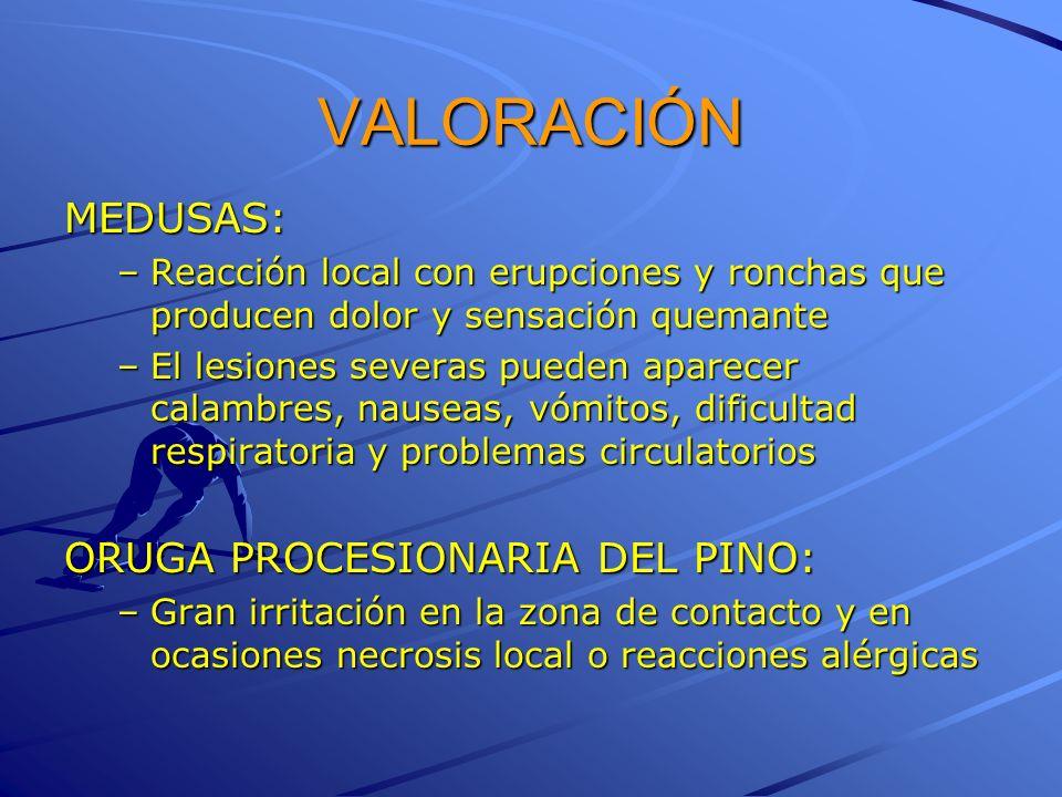 VALORACIÓN MEDUSAS: ORUGA PROCESIONARIA DEL PINO: