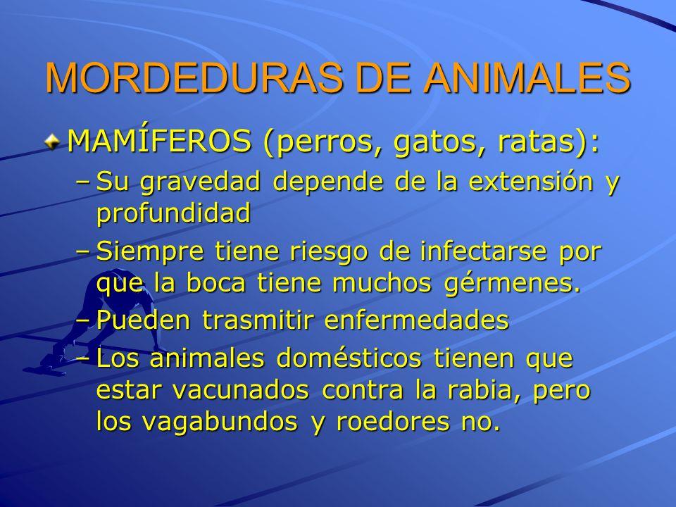 MORDEDURAS DE ANIMALES
