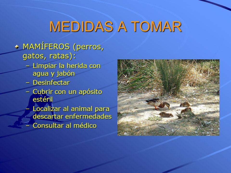 MEDIDAS A TOMAR MAMÍFEROS (perros, gatos, ratas):