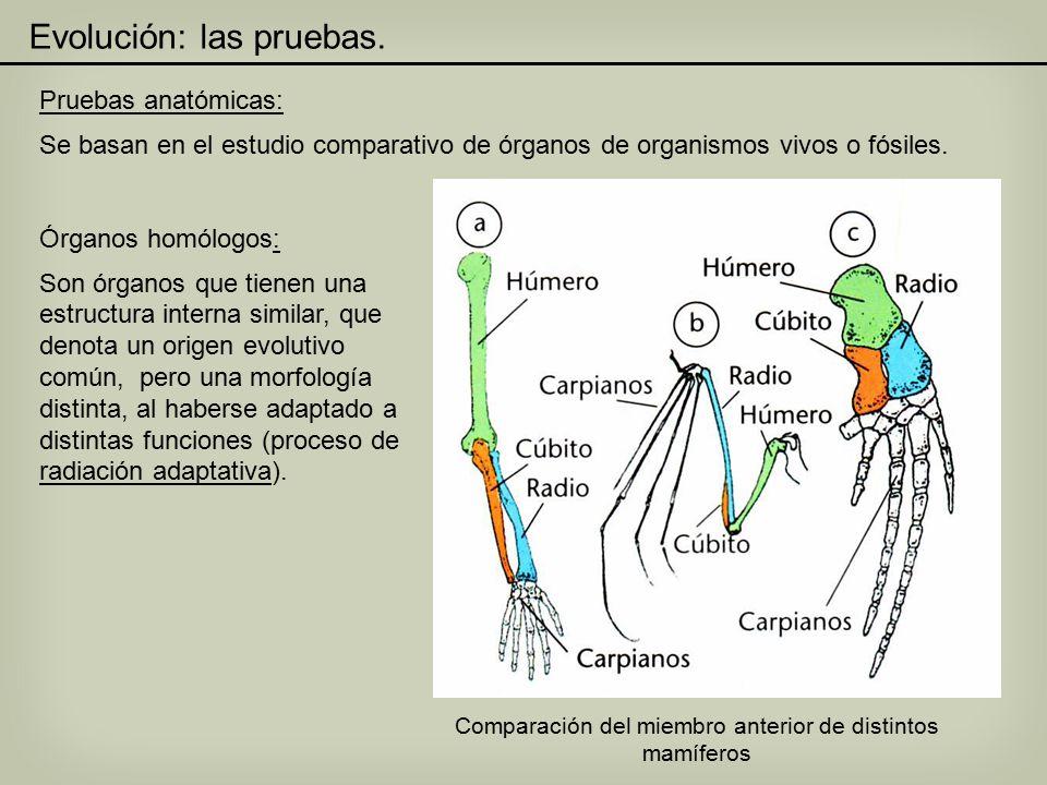 Encantador Comparativo Laboratorio De Anatomía De Los Vertebrados ...