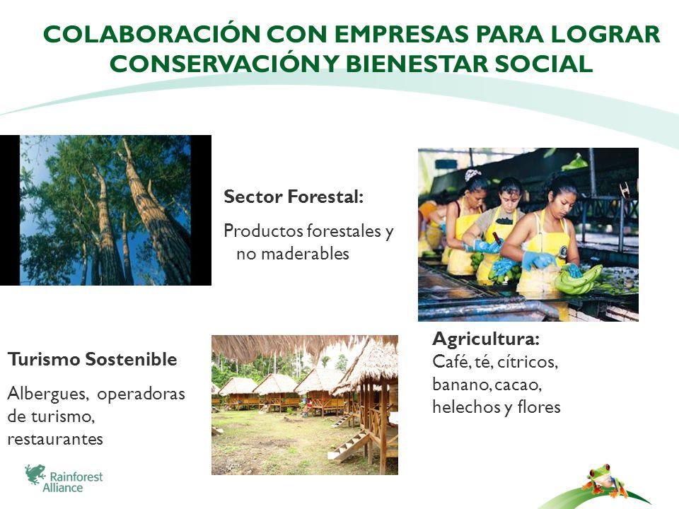 Colaboración con empresas para lograr conservación y bienestar social