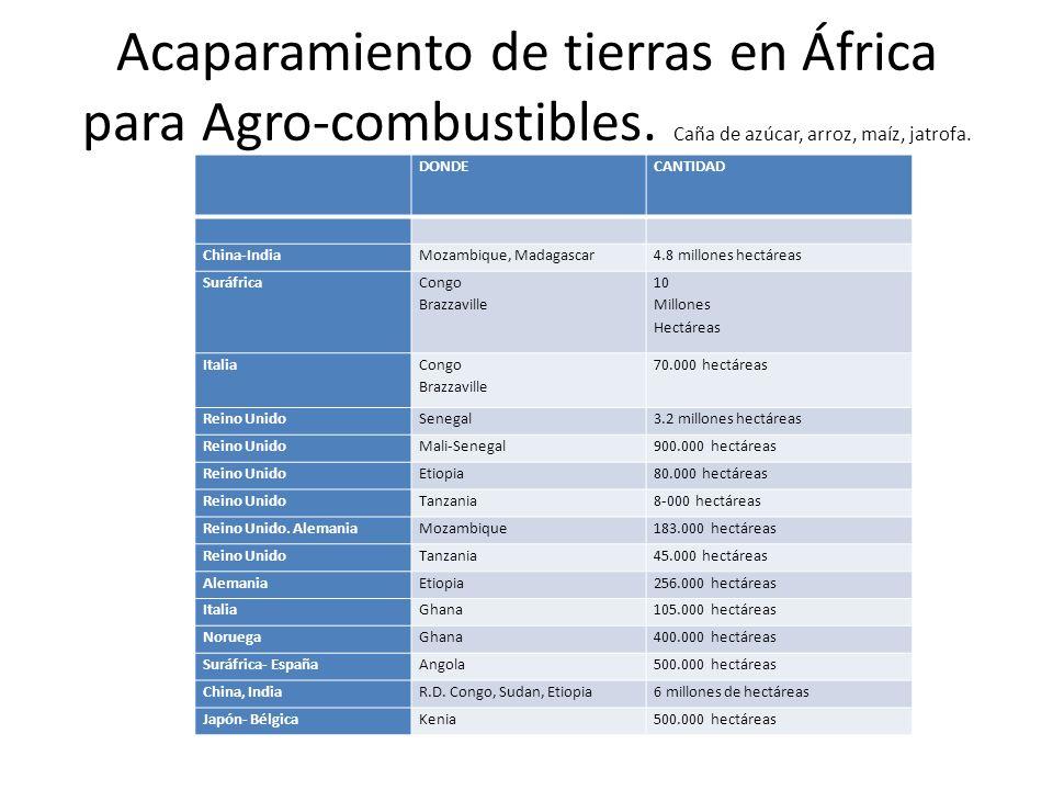 Acaparamiento de tierras en África para Agro-combustibles
