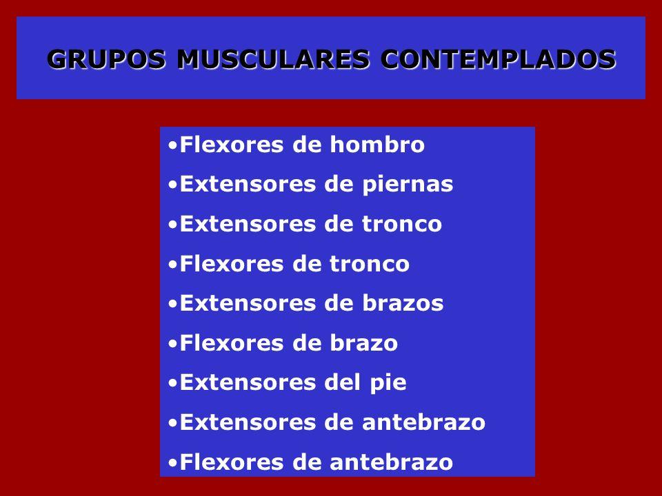 GRUPOS MUSCULARES CONTEMPLADOS