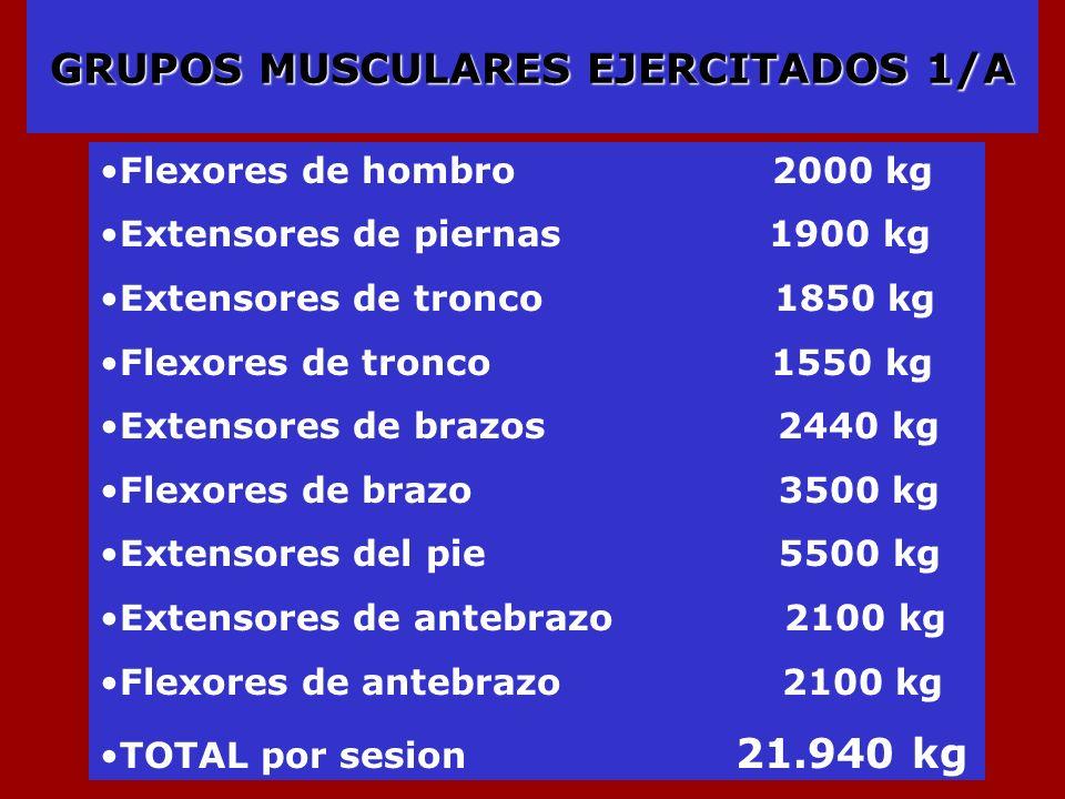 GRUPOS MUSCULARES EJERCITADOS 1/A
