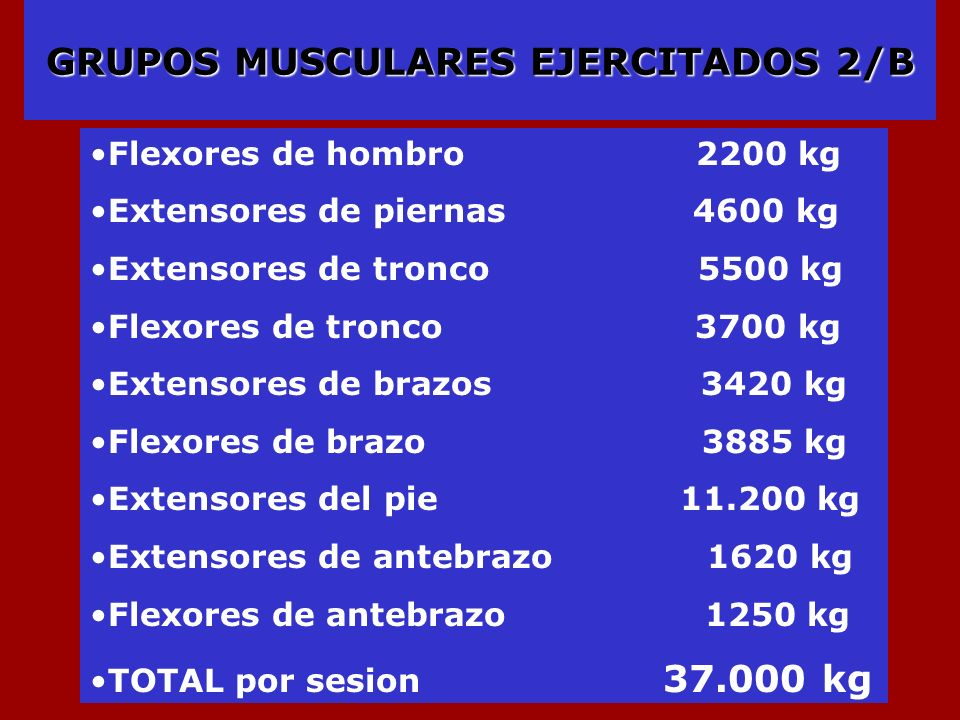 GRUPOS MUSCULARES EJERCITADOS 2/B