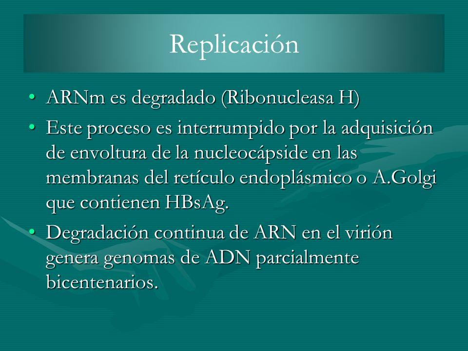 Replicación ARNm es degradado (Ribonucleasa H)