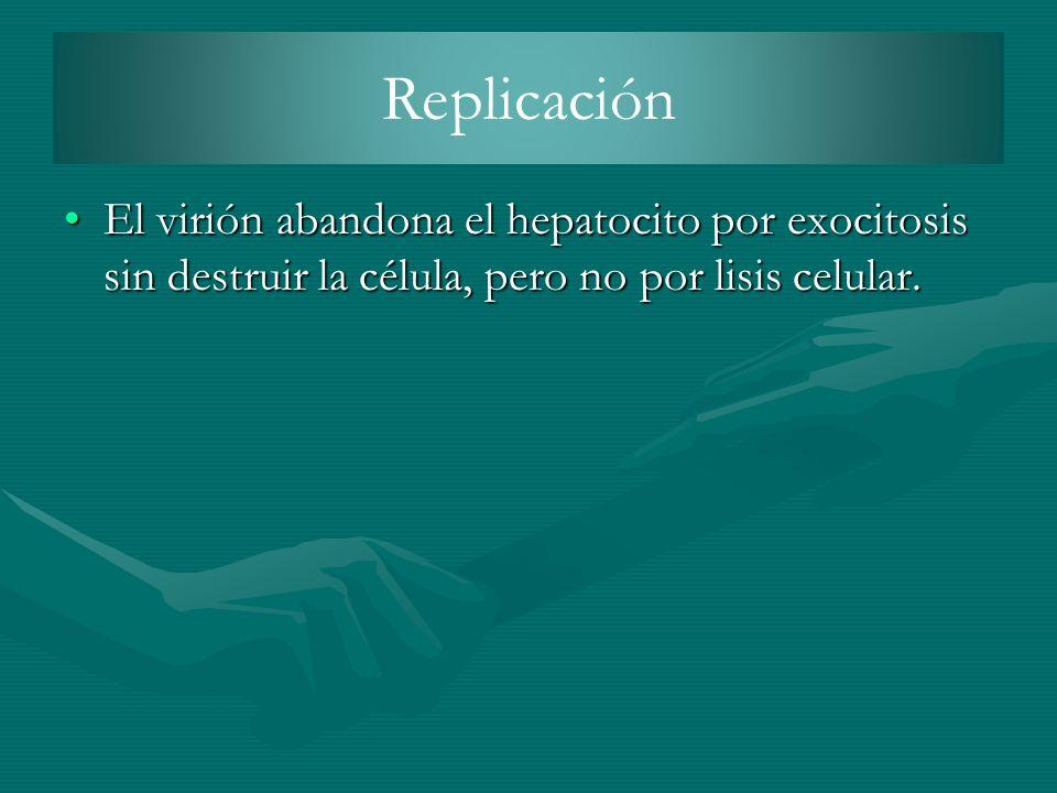 Replicación El virión abandona el hepatocito por exocitosis sin destruir la célula, pero no por lisis celular.