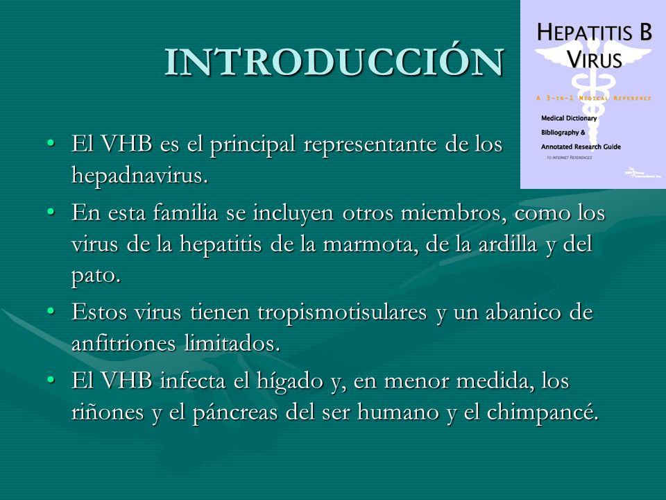 INTRODUCCIÓN El VHB es el principal representante de los hepadnavirus.