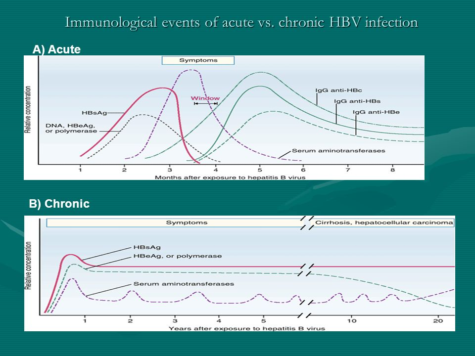 Immunological events of acute vs. chronic HBV infection