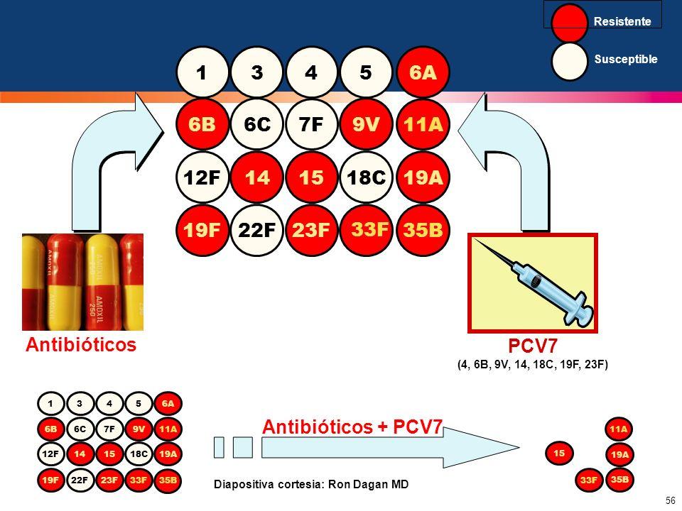 Susceptible Resistente. 1. 3. 4. 5. 6A. 6B. 6C. 7F. 9V. 11A. 14. 12F. 15. 18C. 19A. 19F.
