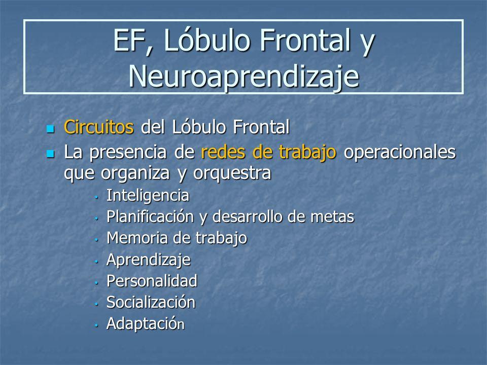 EF, Lóbulo Frontal y Neuroaprendizaje