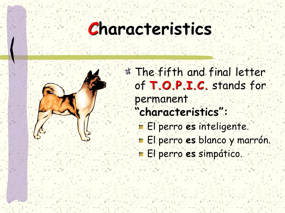 CharacteristicsThe fifth and final letter of T.O.P.I.C. stands for permanent characteristics : El perro es inteligente.
