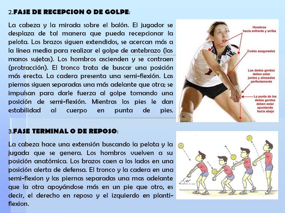 2.FASE DE RECEPCION O DE GOLPE: