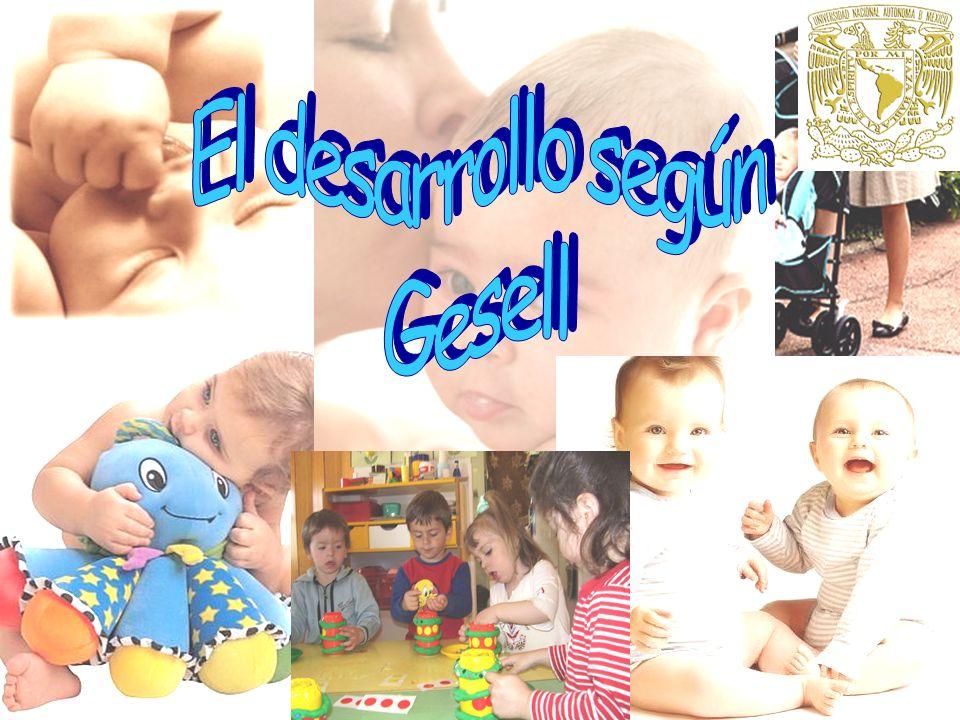 El desarrollo según Gesell