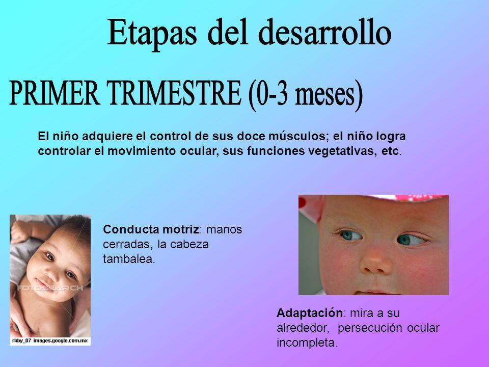 PRIMER TRIMESTRE (0-3 meses)