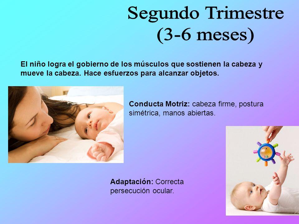 Segundo Trimestre (3-6 meses)
