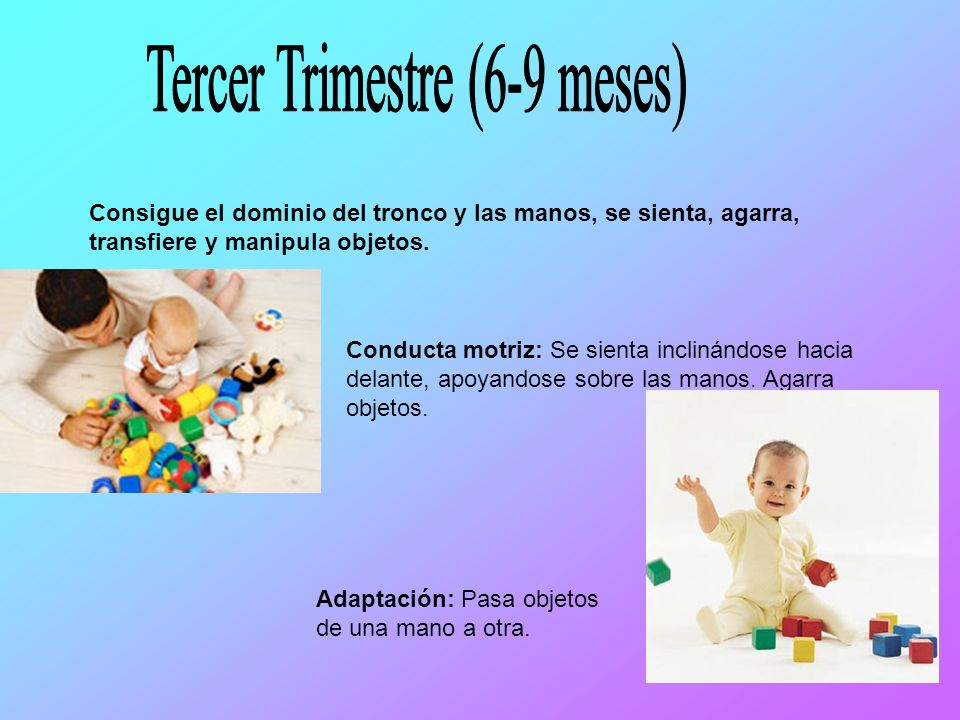 Tercer Trimestre (6-9 meses)