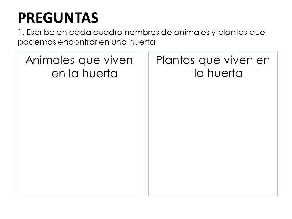 PREGUNTAS 1. Escribe en cada cuadro nombres de animales y plantas que podemos encontrar en una huerta