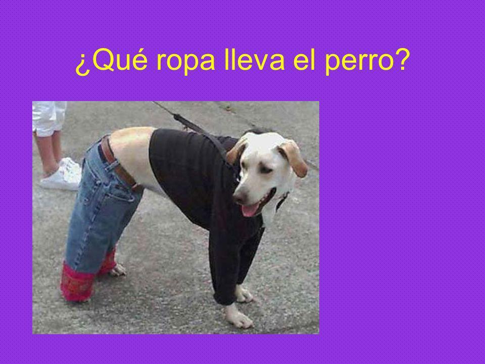 ¿Qué ropa lleva el perro