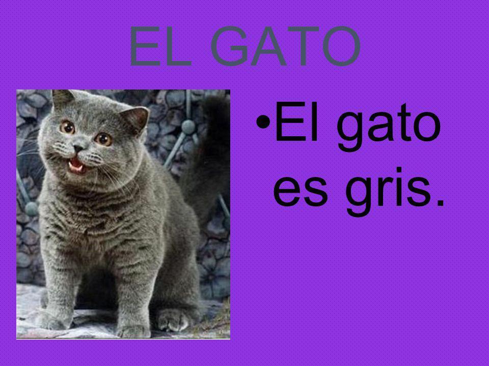 EL GATO El gato es gris.